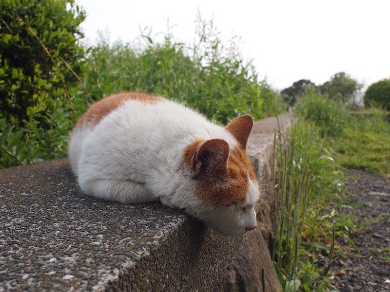 公園の猫02