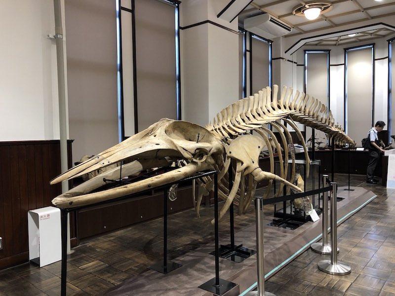 港区立郷土歴史館のクジラの骨格標本