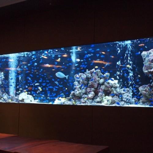 魚が1万匹いるレストラン