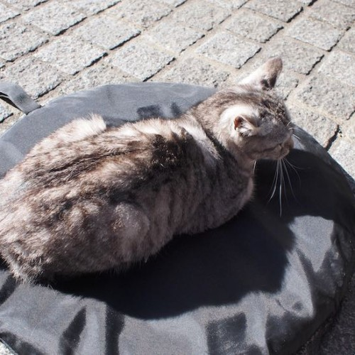 川越の猫01