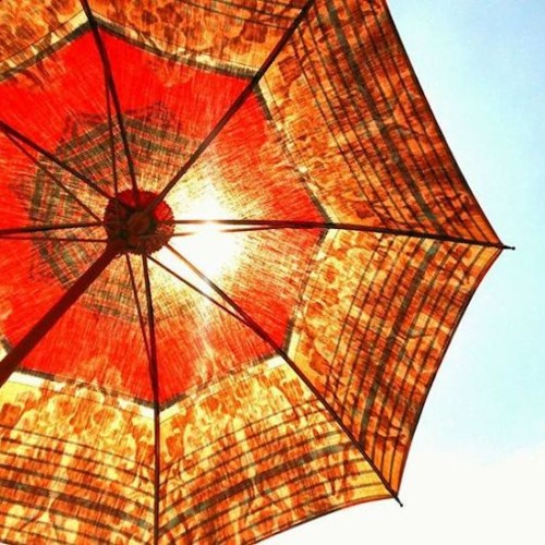 旅する日傘