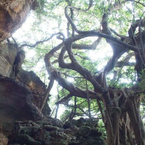 小宝島の洞窟