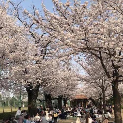 羽根木公園02(メイン)